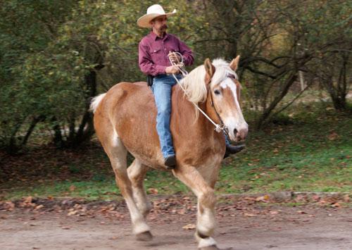 Cow whips Bullwhips Stock whips